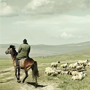 《植树的牧羊人》课文朗读