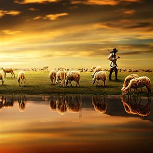 牧羊人在牧羊