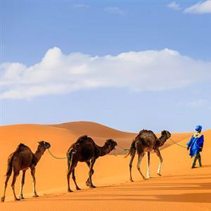 作家作品:《〈骆驼祥子〉(节选)》老舍