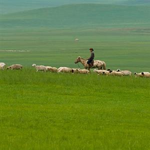 阿尔卑斯山上的牧羊人