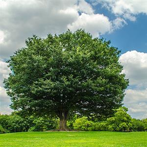 推荐阅读:让奉献之树常青