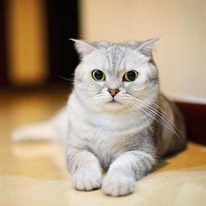 家猫有趣视频