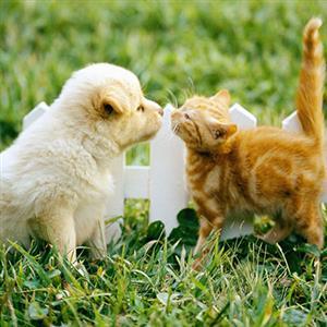 推荐阅读:动物也有爱