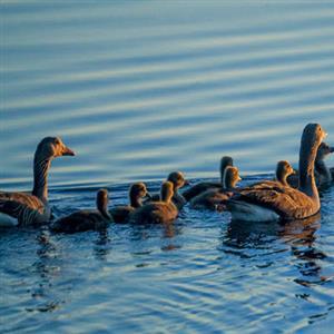 推荐阅读:鸭子的江湖(节选)