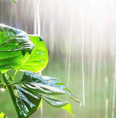 推荐阅读:听雨