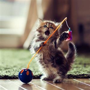 精彩故事:聪明的猫