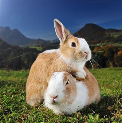 精彩故事:小动物们画风