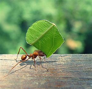 推荐阅读:蚂蚁与屎壳郎