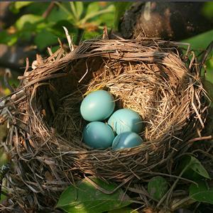 推荐阅读:发光的鸟巢