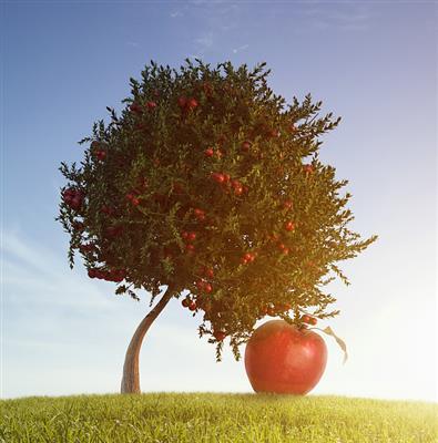 推荐阅读:做一棵永远成长的苹果树