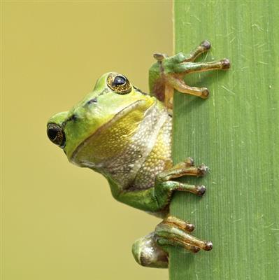 综合知识:青蛙介绍