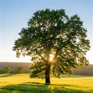 精彩故事:小草和大树