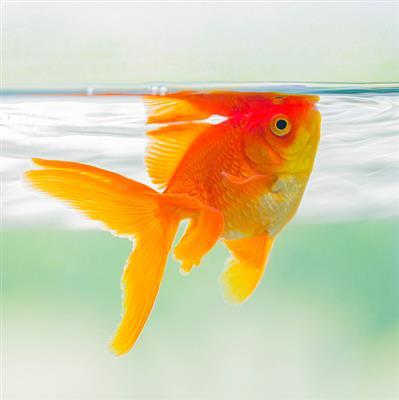 推荐阅读:断尾巴的小金鱼
