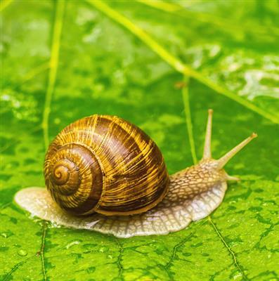 精彩故事:蜗牛慢慢走