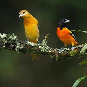 精彩故事:蜗牛与黄鹂鸟