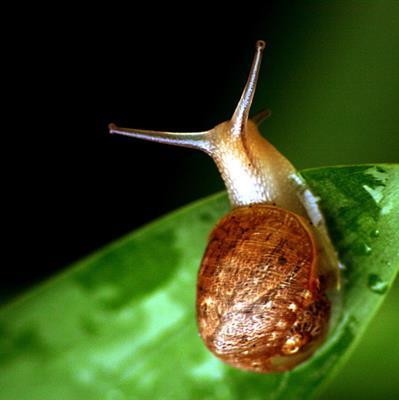精彩故事:蜗牛的愿望