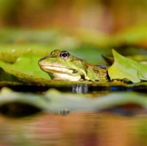 [精]《青蛙写诗》课件1