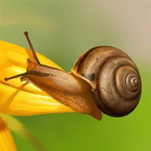 [精]《小蜗牛》课件1