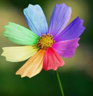 推荐阅读:亲情是永不凋谢的小花