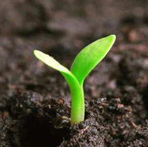 推荐阅读:小种子