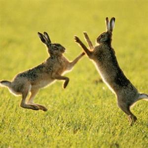 综合知识:兔子的外形特点