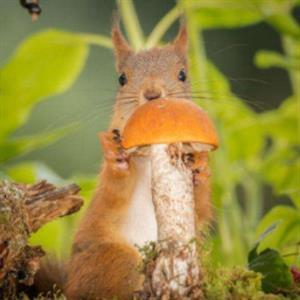 精彩故事:小松鼠找粮食