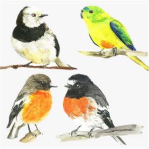 精彩故事:四只小鸟