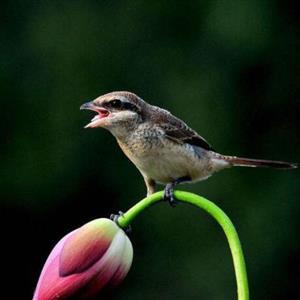 推荐阅读:小鸟
