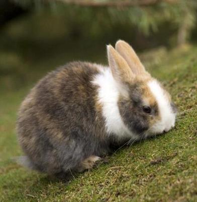 精彩故事:小兔子乖乖