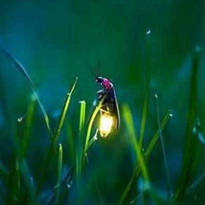 推荐阅读:《萤火虫》叶圣陶