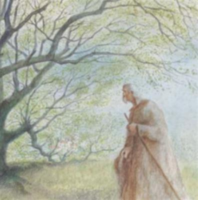 [精]《植树的牧羊人》课件2