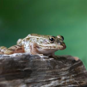 精彩故事:寄给青蛙的信