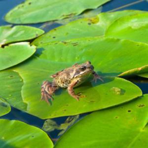 精彩故事:固执的青蛙