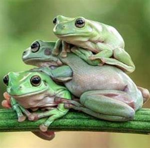 三只青蛙的故事