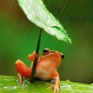 故事《青蛙写诗》