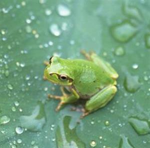 《青蛙写诗》课文朗读