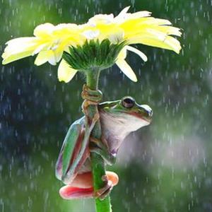 大雨和小雨